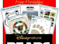 Theme - Bears