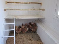 Inspiration och information om höns, hönshus och hönsgårdar. Chicken coop and run, hens.