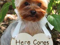 Dogs/Animals Weddings & Beautiful, Fun & Creative Weddings !!!