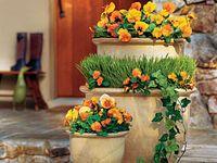 Garden/Gardening Ideas