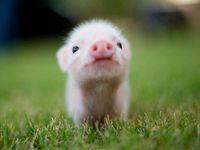 Just plain cute!