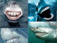 Sharks <3