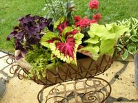 Outdoors living and Gardening