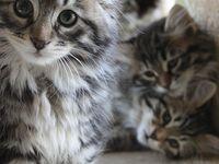 Furry beauties