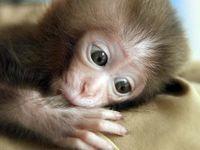 Powerful Primates