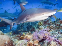 All Things Sharks and their relatives