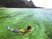 A Mermaid Love