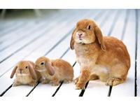 i heart bunnies