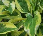 Vertical Gardening (shady)