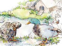 Raising Ducks