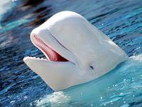 Underwater wildlife sea and ocean habitat photography.