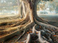 Trees, Trees & More Trees!