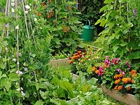 Gardening & Backyard Homesteading