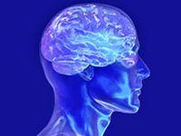 Human Nature (Psychology)