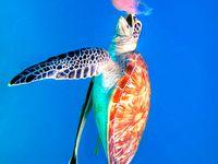 Photography {Animals: Sealife}