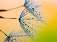 Nature and Amazing Photos Macro and Zoom Outs