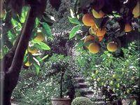 Tuscan style garden