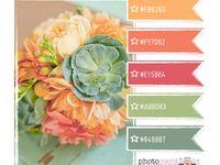 Graphic Design: Colour Palettes