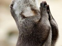 Even animals pray