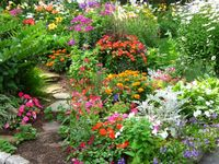 Gardens/Plants/Flowers