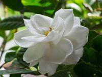 Gardening Tips/Resources