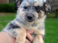 Adoptable pets and more