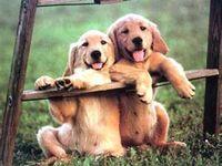 I love, love, love dogs!!!
