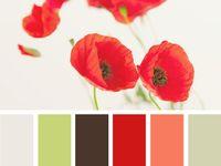 Color & pattern