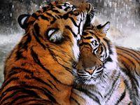 Wild Animals & Creatures of the World