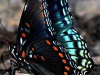 Butterflies! !
