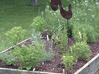 Gardening-Herbs