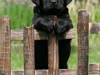 Puppiesssss!!!! :))))