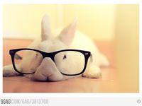 Cute Animals.