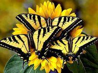 <3 Butterflies <3