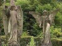 ~Angels & Fairies~