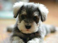 Dogs & Animals