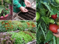 Growing  and caring for flowers,veges,and fruit