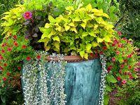 For the Home-Garden