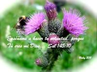 Psalms/Salmos 126-150