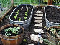 GARDENING & HOMESTEADING TODAY FOR A HEALTHIER TOMORROW