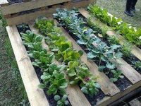 Gardening, Gardens, Veggies, Plants, Trees, Flowers