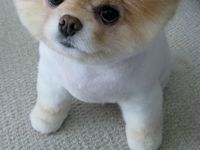animals & pure cuteness