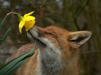In Memory of My Home Where The Foxes Once Ran Free