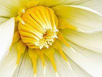 Beautiful Flowers around the world
