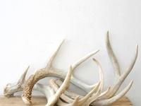 Deer antler decoration