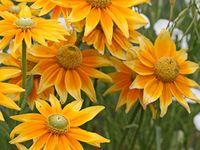 flower for my garden