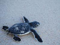 Turtles Riviera Maya