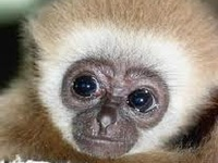 Baby Animals for kids to look at :)