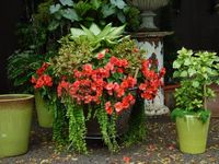 Flower Pots and Containers