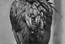 Crow / by Pauline Teng